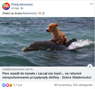 prawnicy lajkują posty ze zwierzetami